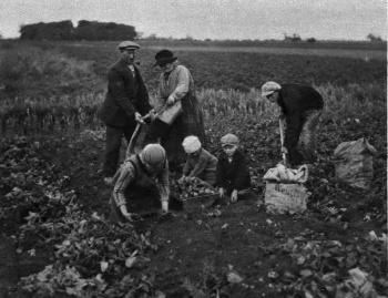 Fan Fryske Grun 1927 Aardappelrooien.jpg