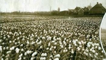Gezicht op de Hearewei 1934