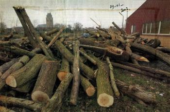 Kappen bomen Griedsje/Boppeslach