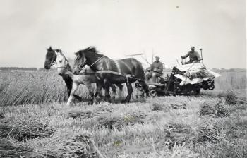 Graanoogst 1947