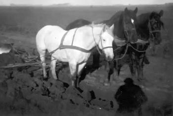 Ploegen 1947